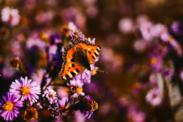 Beautiful orange butterfly on flower picture id1009439288?b=1&k=6&m=1009439288&s=612x612&w=0&h=bcrvxncuooilgpqssd uurdhqhc7bxlutv1tmkgbkkw=