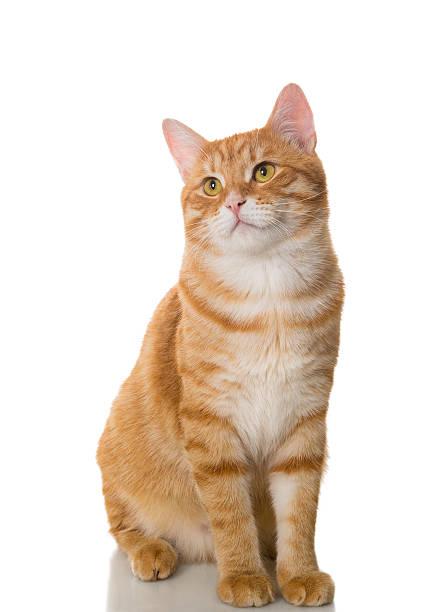 Beautiful orange cat stock photo