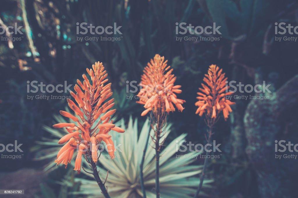 Photo libre de droit de Belle Fleur Doranger Dans Le Jardin Ton ...