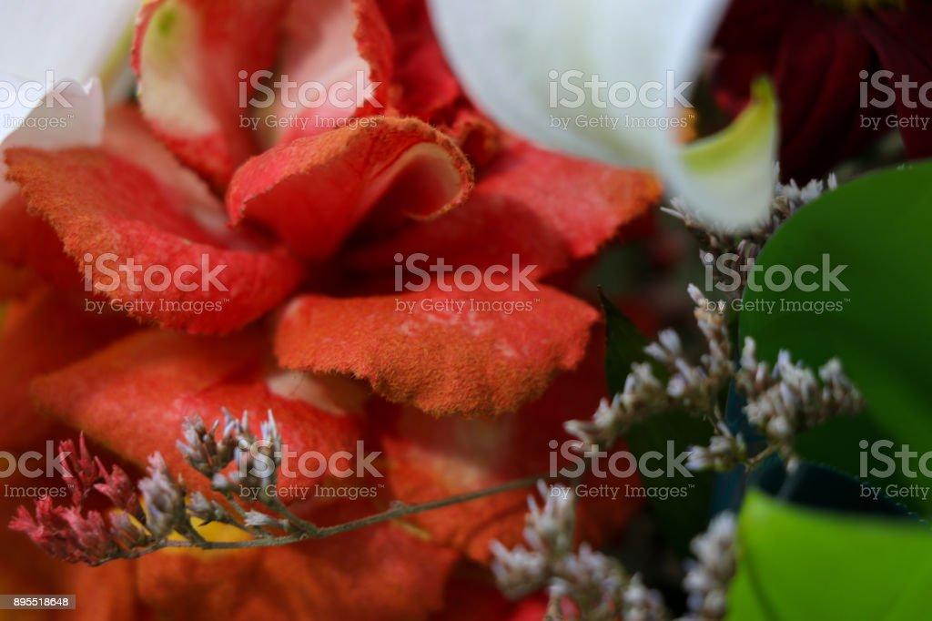 A beautiful orange flower stock photo