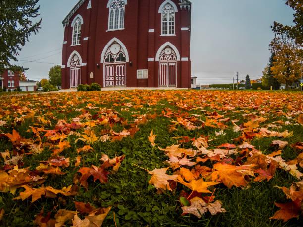Beautiful orange leaves that have fallen. stock photo