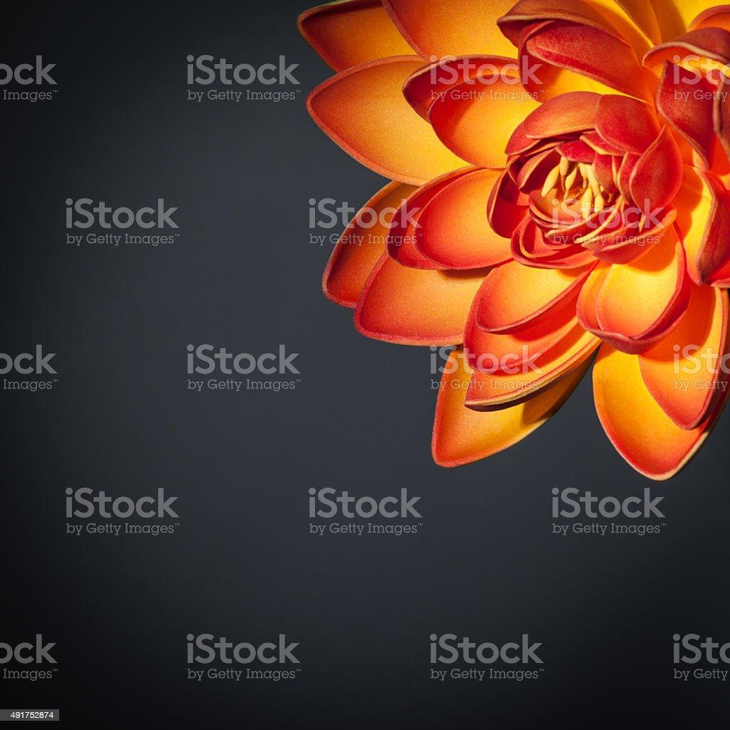 Beautiful orange lotus flower stock photo more pictures of 2015 beautiful orange lotus flower royalty free stock photo izmirmasajfo