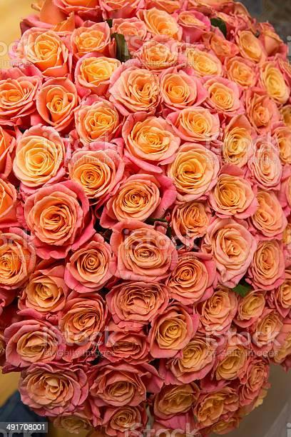 Beautiful orange rose picture id491708001?b=1&k=6&m=491708001&s=612x612&h=pjzjijvidynfmqp7rlzb7i 7mxtjt7jnyoxoq2eeb6a=