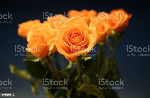 Beautiful orange roses picture id94996110?b=1&k=6&m=94996110&s=612x612&h=cdpujruqrlgq2z9bbcl8lkbk3uuqh1klhsep5txwzlk=