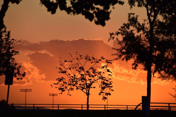 Beautiful orange sky background and tree silhouette. Sunset views during summer season in Bakersfield, CA. stock photo