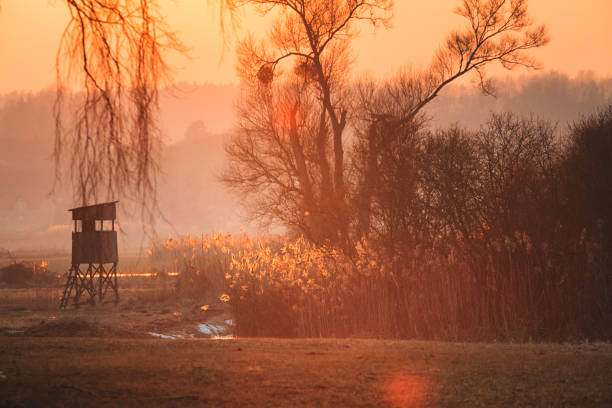 Beautiful orange sunset by the willow tree at the meadow Beautiful orange sunset by the willow tree at the meadow in Oderbruch / Brandenburg / Germany hunting blind stock pictures, royalty-free photos & images