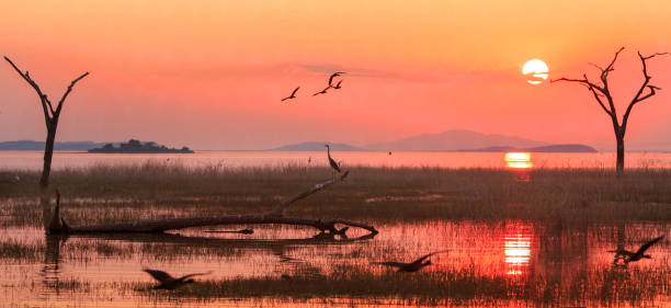 Schöne Orange Sonnenuntergang über Lake Kariba mit Vögel fliegen und eine Reiher-Silhouette mit guten Spiegelung im Wasser, Simbabwe – Foto