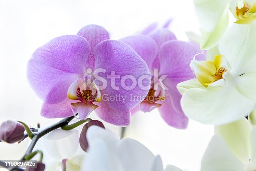 Beautiful orchid blossom on green brunch close up