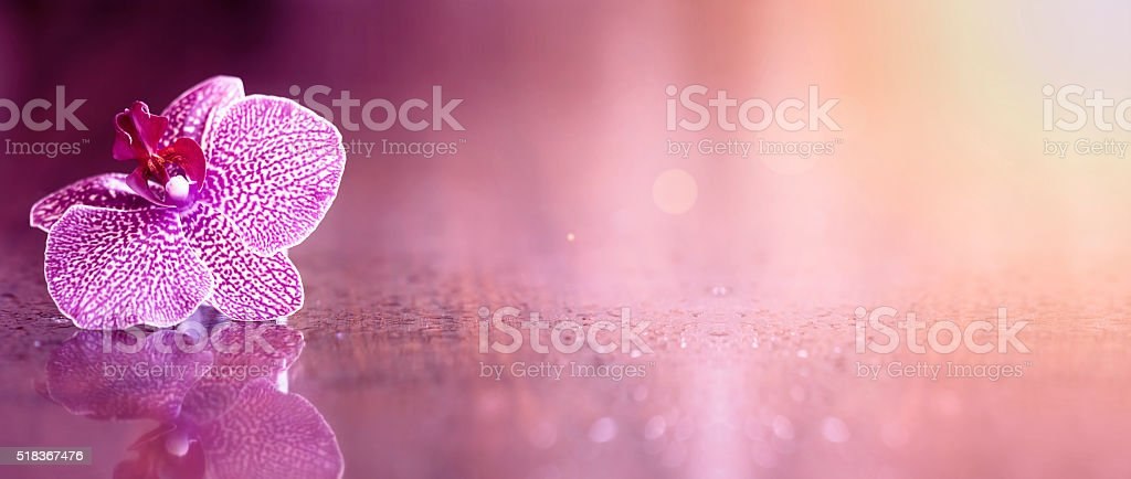 Beautiful orchid flower banner stock photo