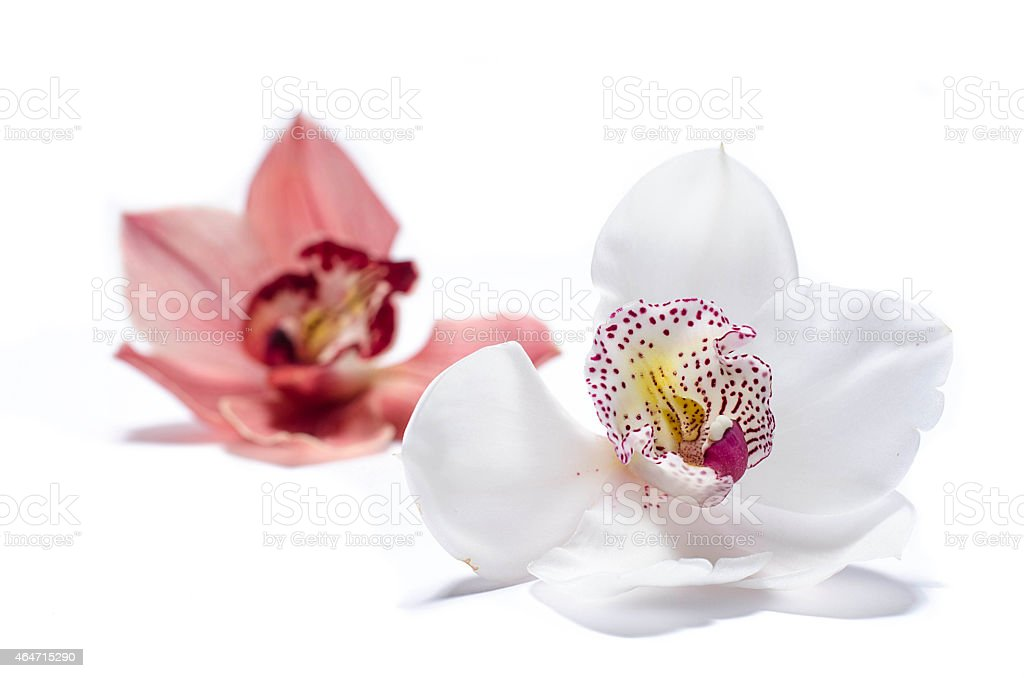 Beautiful orchid flower stock photo