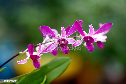 Image of Beautiful orchid flower tree.