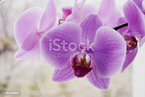 Beautiful Orchid flowers Close up Selective focus