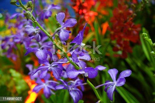 Thailand, Orchid, Florist, Bouquet, Backgrounds