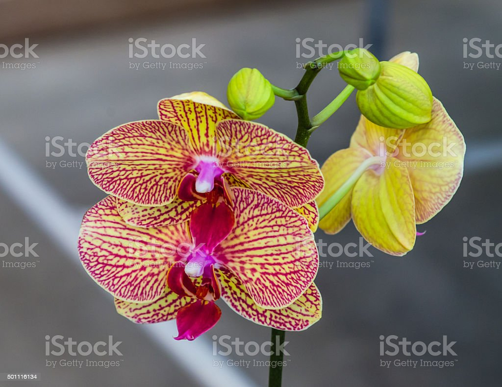Beautiful orchid  flowers sweet,Orchids in the garden. stock photo