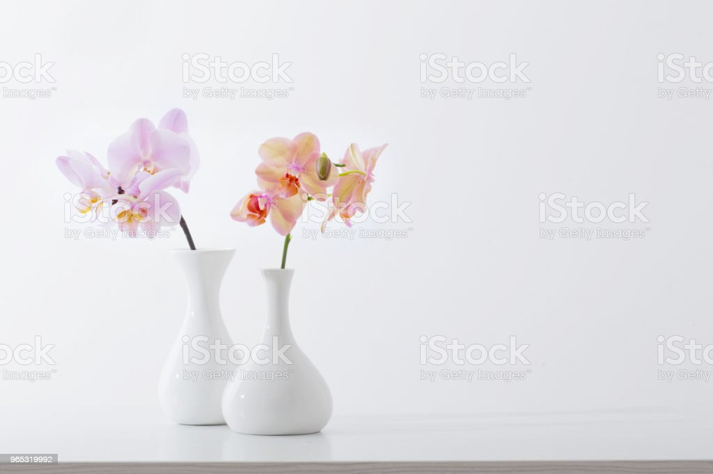 beautiful orchids in white vase on white table zbiór zdjęć royalty-free