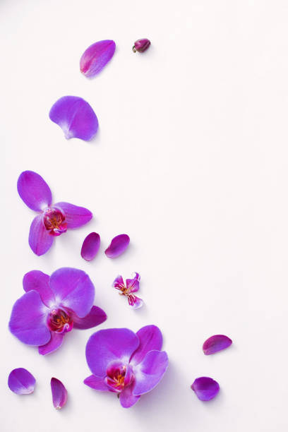 beautiful orchids on white background - orchidea foto e immagini stock