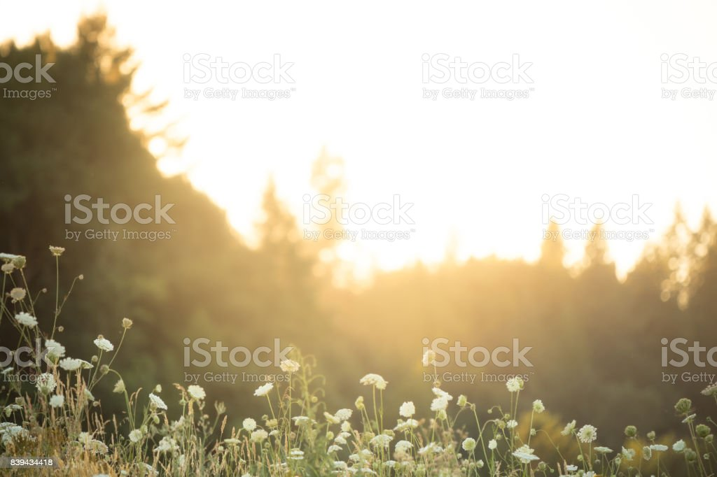 Beautiful Oregon meadow with flowers and trees at sunset stock photo