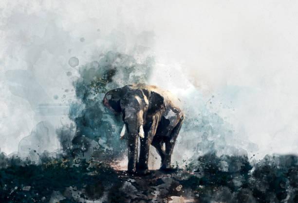 beautiful painting art watercolor elephant - foto stock