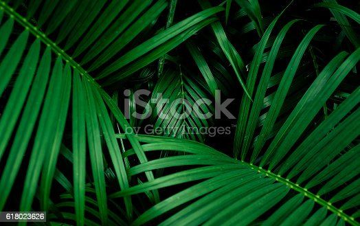 istock Beautiful palm leaf. top view 618023626