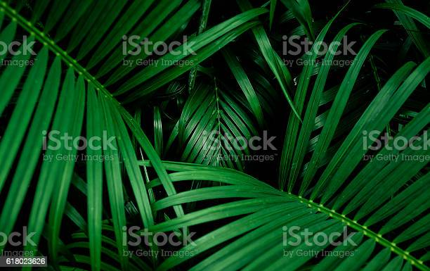 Beautiful palm leaf top view picture id618023626?b=1&k=6&m=618023626&s=612x612&h=cvpck7 2wfuelxmbmecvqfs9 tqvfxxlc5e3idnrd54=