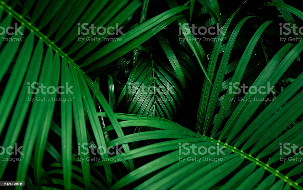 Beautiful palm leaf. top view - foto de stock