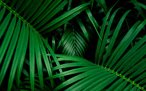 Beautiful palm leaf. top view stock photo