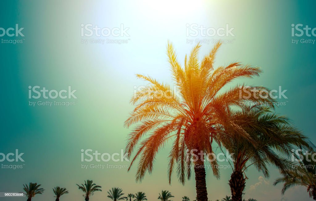 Beautiful palm trees and sun stock photo