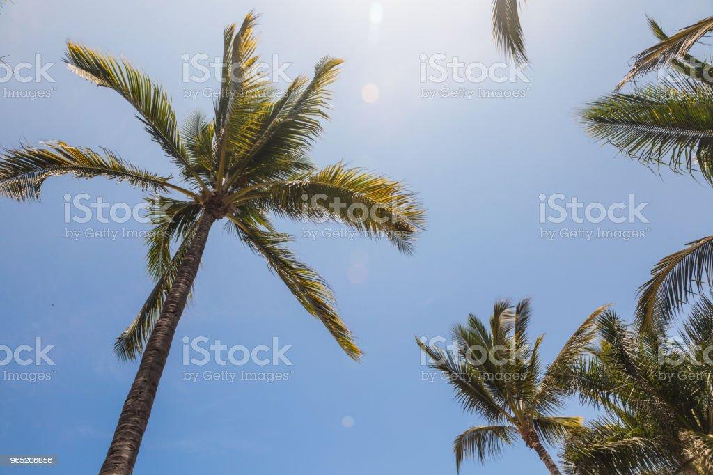 beautiful palm trees standing tall zbiór zdjęć royalty-free