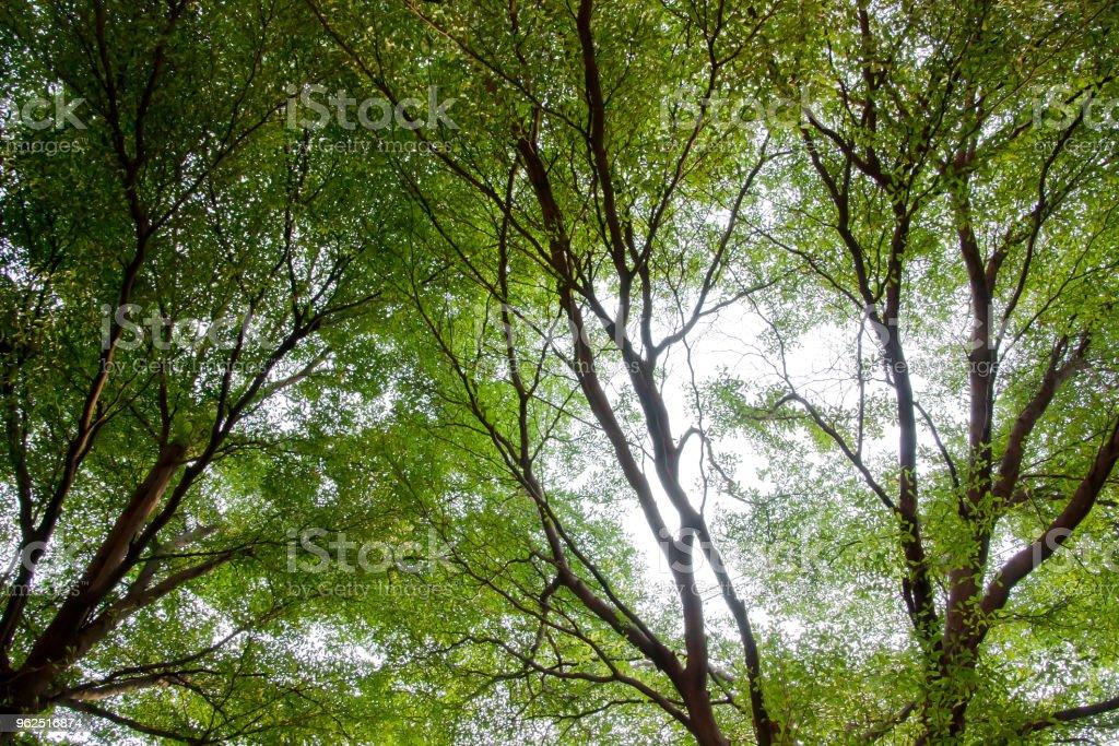 Vista de fundo bonito panorama de árvores e pequenas folhas textura no parque durante o tempo de primavera. - Foto de stock de Alto - Descrição Geral royalty-free