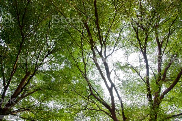 Foto de Vista De Fundo Bonito Panorama De Árvores E Pequenas Folhas Textura No Parque Durante O Tempo De Primavera e mais fotos de stock de Alto - Descrição Geral