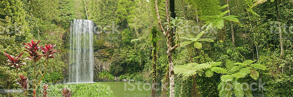 Beautiful panorama shot of tropical Millaa-Millaa falls in Australia royalty-free stock photo
