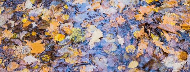 Beautiful panoramic autumn scenery with colorful leaves in puddle picture id1268790548?b=1&k=6&m=1268790548&s=612x612&w=0&h=6d ibhj0jjgik0gme4tvonklzsbnxp2dbdxsqwpdcvi=