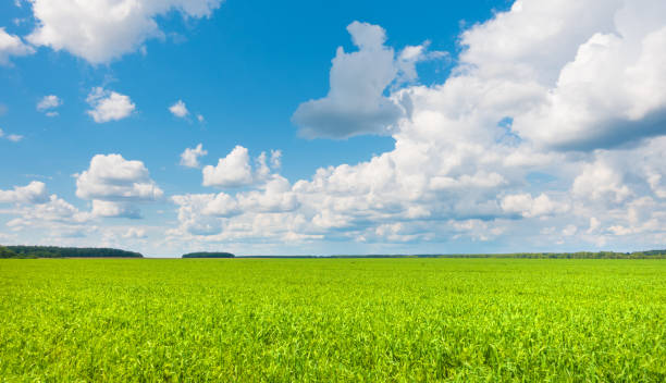 Beautiful panoramic landscape, sky and fresh green grass. stock photo