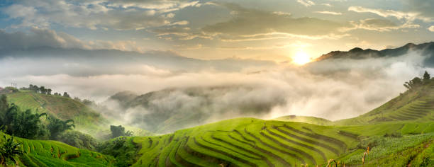 Beautiful panoramic view of terraced rice fields in Mu Cang Chai submerged in mist at dawn stock photo