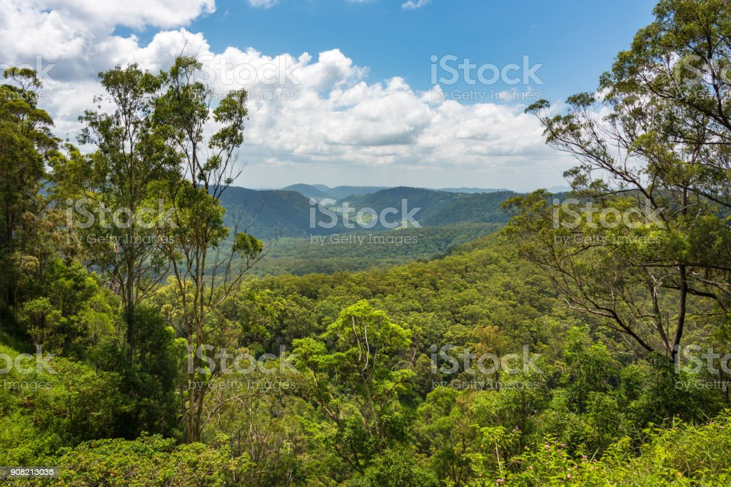 Beautiful panoramic view over tropical rain forest tree canopies stock photo