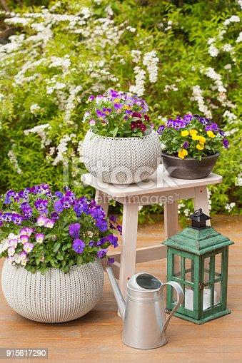 istock beautiful pansy summer flowers in flowerpots in garden, watering can 915617290