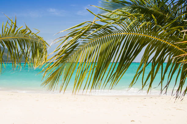 Beautiful paradise beach with palm trees and blue sky for travel and vacation in holiday relax time stock photo