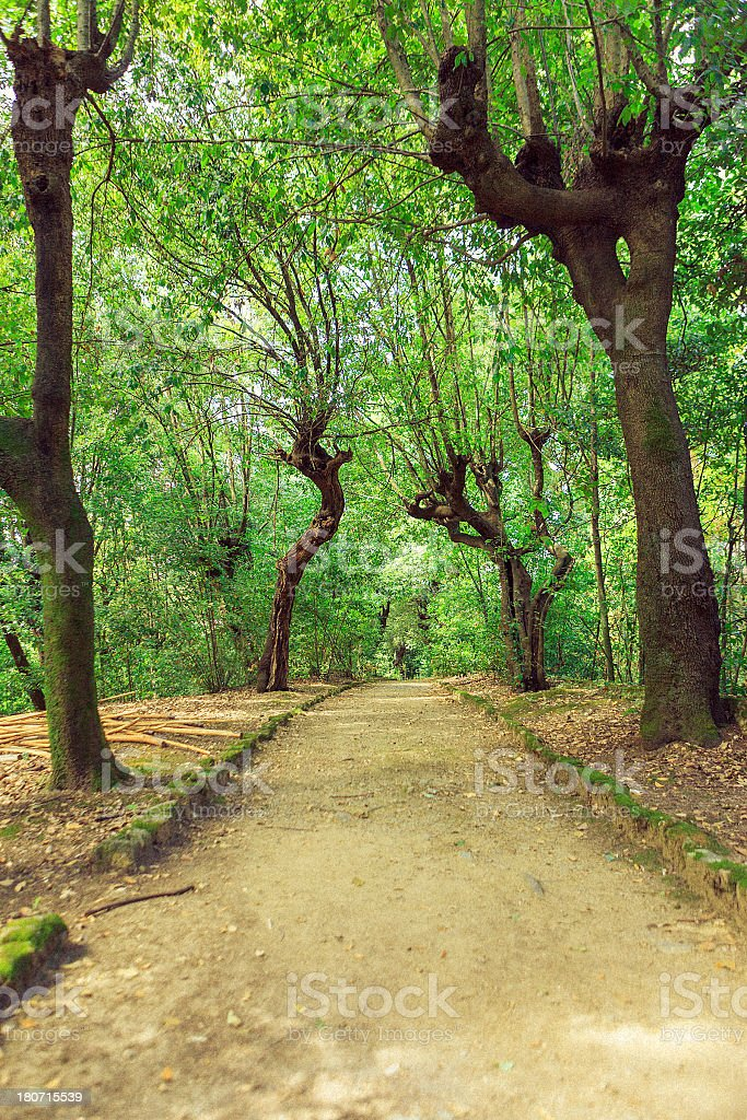 Beautiful park alley royalty-free stock photo