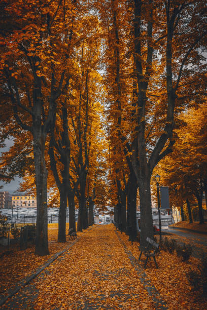 Beautiful Park During Autumn in Bologna, Italy stock photo