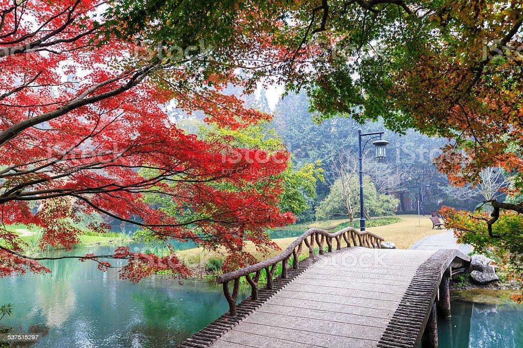 beautiful park in autumn stock photo