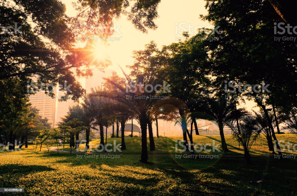 Beautiful park in the morning stock photo