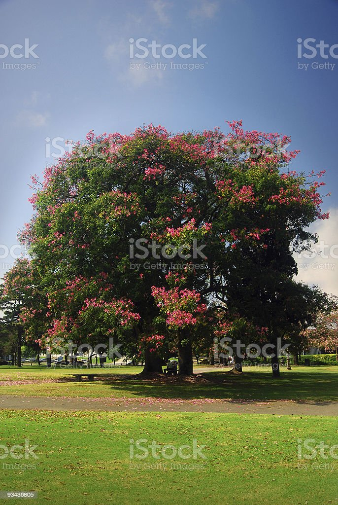 Beautiful Park royalty-free stock photo