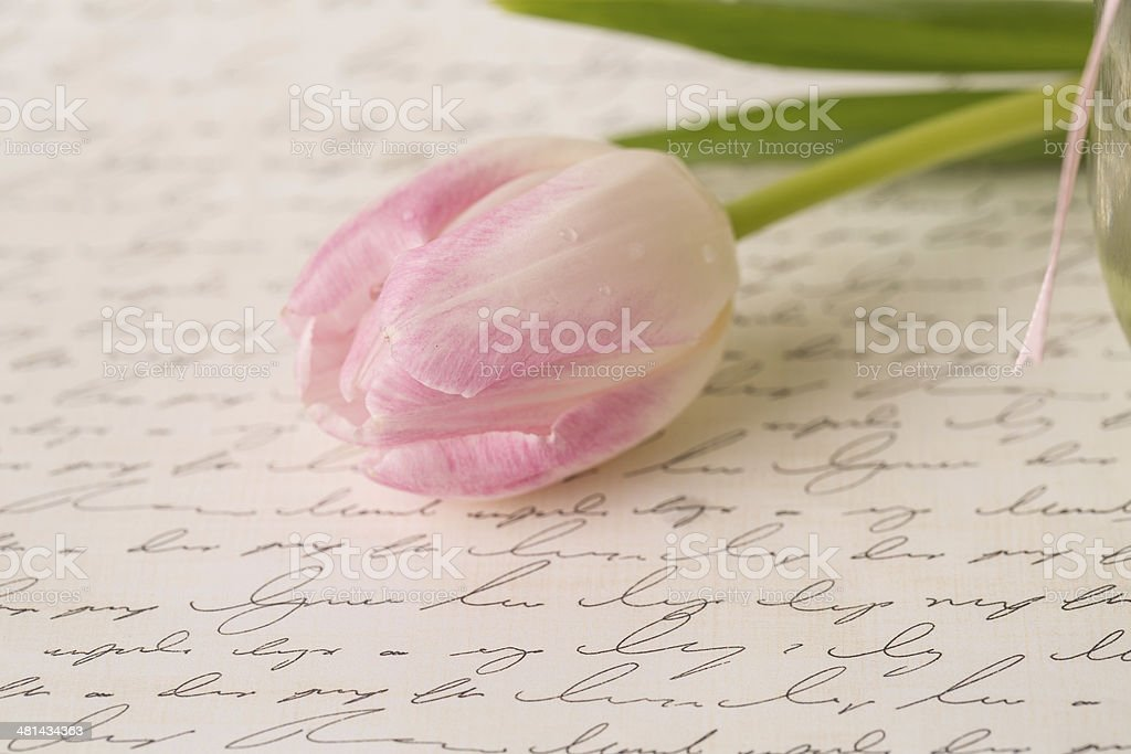 Beautiful Pastel pink and White Tulip on Handwriting Paper stock photo