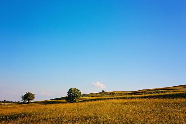 Beautiful pasture and deep blue sky stock photo