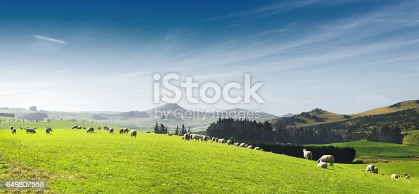 landscape of beautiful pasture with animals near hill in summer sunny day