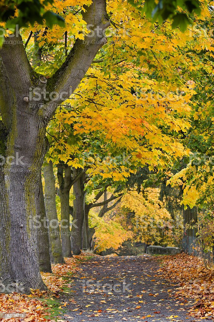 Beautiful Path with Fall Colors royalty-free stock photo