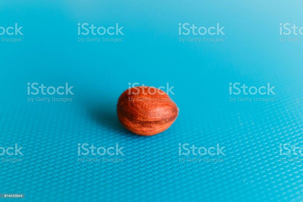 beautiful peeled hazelnut on blue background stock photo