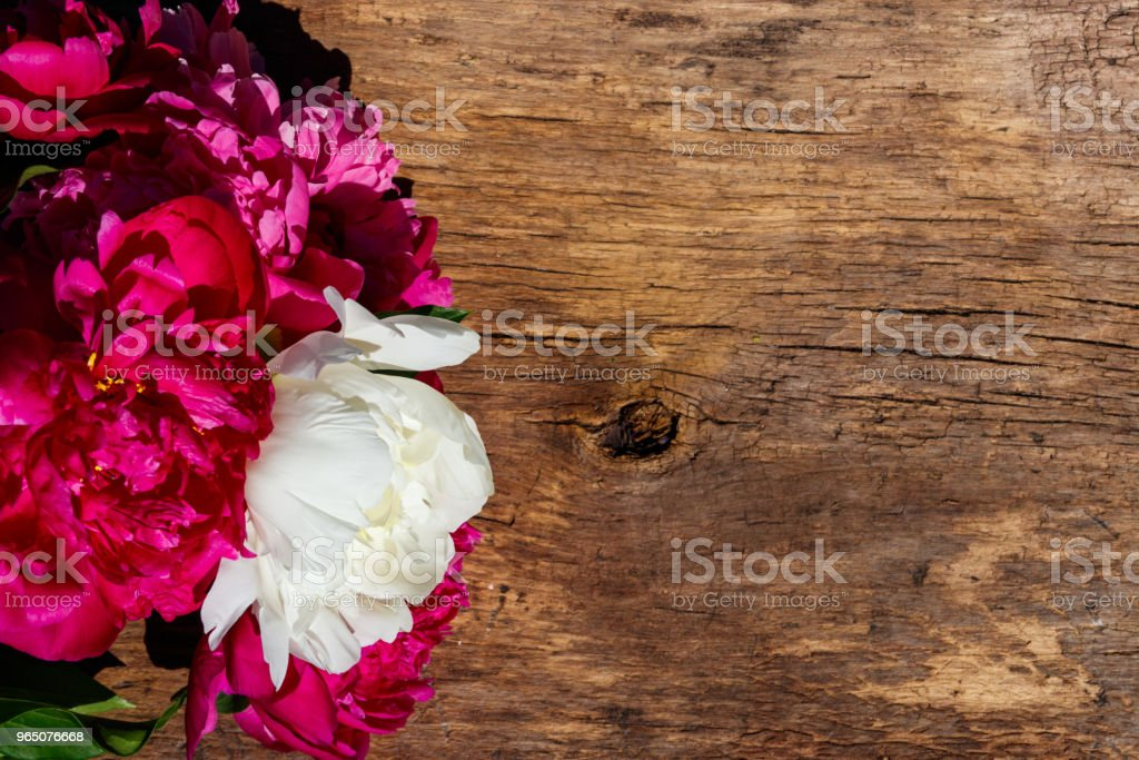 Beautiful peony flowers on rustic wooden background. Top view, copy space zbiór zdjęć royalty-free