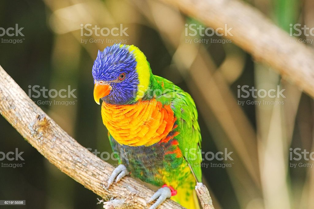 Beautiful perched Maccaw on a branch. royalty-free stock photo