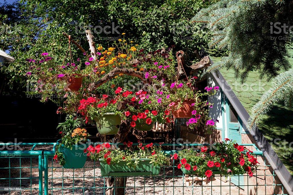 Beautiful Petunia Flowers In Garden Design Stock Photo Download